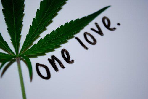 one love canna